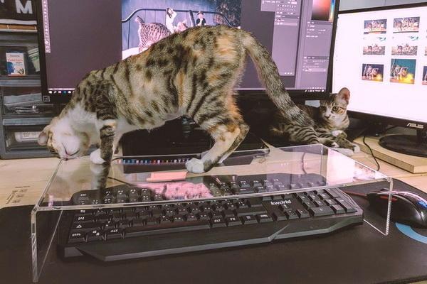 Антикотская подставка на клавиатуру