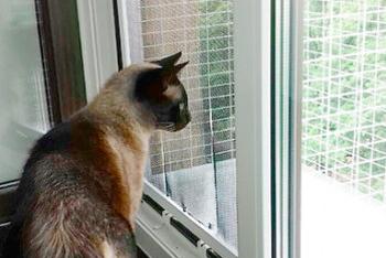 Москитная сетка антикошка для кошачьего балкончика (без дверцы)