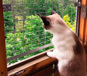 Сетка антикошка на деревянное окно