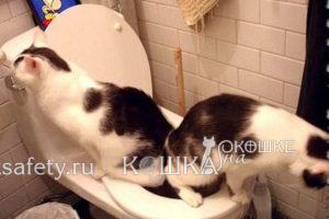 foto-smeshnye-koshki2