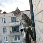 Рекомендации по безопасности кошек