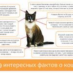 9 интересных фактов о кошках