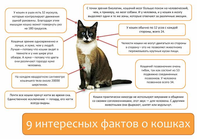 9-фактов