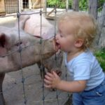 Домашние животные снижают риск возникновения аллергических заболеваний у детей