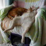 Отличается ли сон кошек от человеческого?