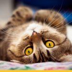 Зачем кошкам усы?