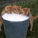 Кошки и собаки по-разному пьют воду