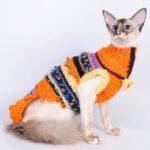 Балийская кошка (BAL)