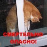 Вертикальное проветривание калечит и убивает кошек!