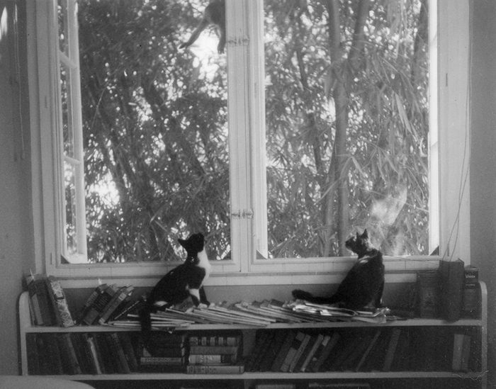 EH8552P Date Unknown Ernest Hemingway's cats, Friendless' Brother and Willy, watch a monkey outside the window at Finca Vigia.