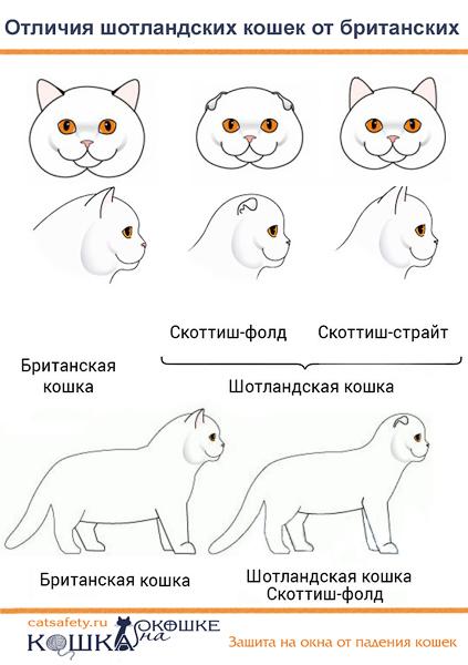 otlichiya-shotlandcev-ot-britancev
