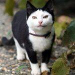 Необычные окрасы кошек — забавный дизайн от природы!