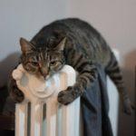 Почему кошки так любят тепло?