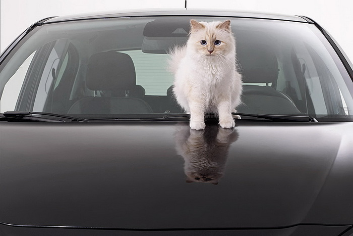 choupette-cat-2