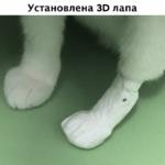 В Новосибирске научились создавать вживляемые протезы для животных