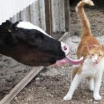 Как кот придумал умываться на халяву
