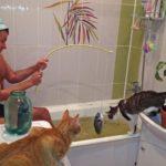 Как разнообразить кошачьи будни?