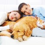 Отличия кошатников от собачников