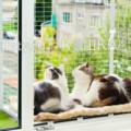 Съёмный кошачий балкончик изготовим и доставим в любую точку РФ до вашего дома!