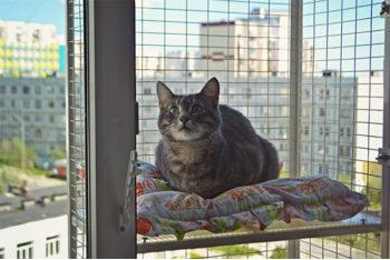 Полочка для кошачьего балкончика съёмная