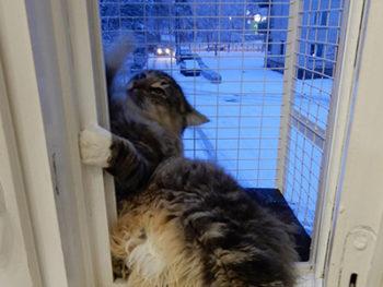 Кошачий балкончик на деревянное окно