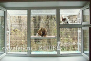 Кошачий балкончик во все окно