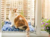 Вольер-выгул на окно WalkCat