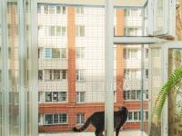 Выгул за окно WalkCat