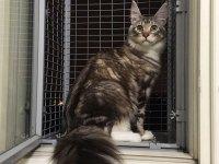 Кошачий балкон для кота на окно