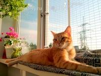 антикошка-кошка-на-окошке