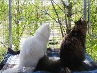вольер-выгул-для-кота