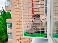 вольер-для-кошки