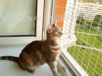 защита-кошки-на-окне-антикошка-сетка-кошкасетка