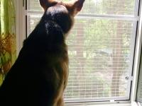 защита-на-окно