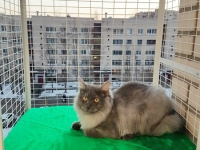 кошачий балкон