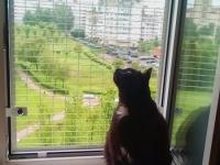 кошачья-сетка