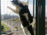сетка-антикошка-решётка-на-окно-кошка-на-окошке