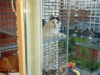 Балкон для кота