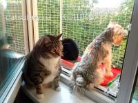 Кошачий балкончик съёмный на окно