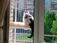 Съёмный-вольер-на-окно.ipg
