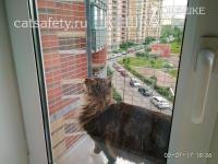 антикошка вольер выгул на окно (1)