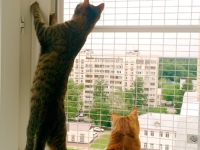 антикошка вольер выгул на окно (2)