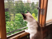 антикошка-сетка-для-кота