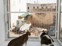 защита кота на окне