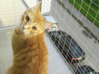 клетка за окно для кошек