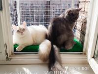 кошачий-балкон-выгул-на-окно