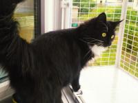 кошка на окошке антикошка вольер на окно