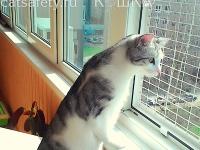 кошка на окошке антикошка